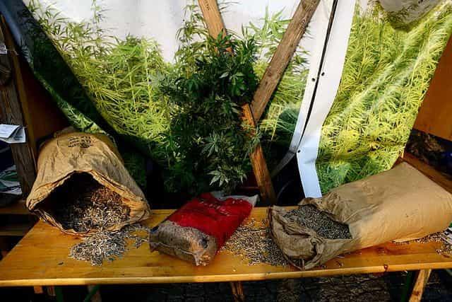 Negocios de Marihuana